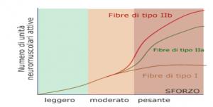 fibre_muscolari2