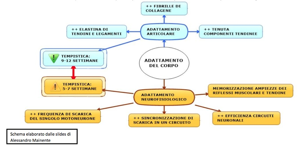 periodizzazione calisthenics