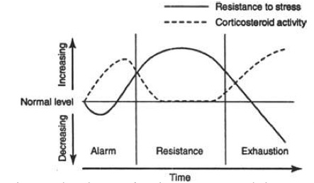 periodizzazione calisthenics e corpo libero